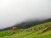 dsc0197red,tåge på Færøerne