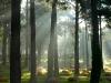 10,Holme Kirkegård,lys i træerne