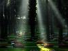 16,Holme Kirkegård,lysstriber