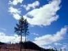 41,træer i Sverige